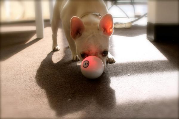 Sphero and a Pup